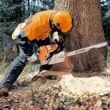 Евгений Спиливаем, обрезаем, опрыскиваем деревья любой категории