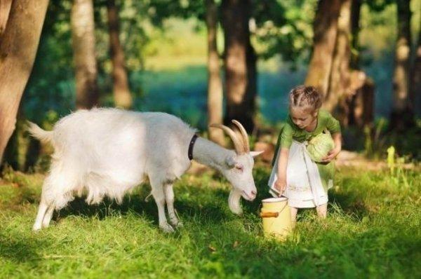 Козье молоко, Кисломолочная продукция ,  Талгар