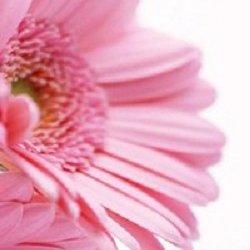 Флоранж,сеть цветочных магазинов,Мурманск