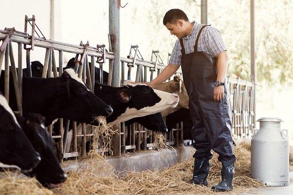 ИП Воронова Т.С, Выращивание крупного рогатого скота, реализация мяса и молочной продукции,  Талгар