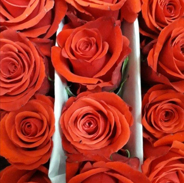 AniRose, салон цветов, Иркутск