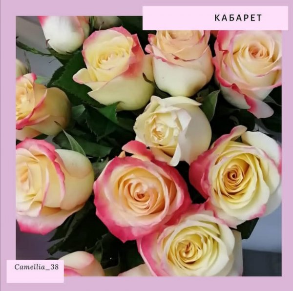 Camellia, магазин цветов, Иркутск