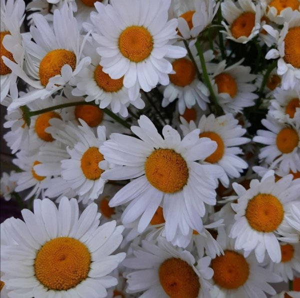 FLORENS, салон цветов,  Иркутск