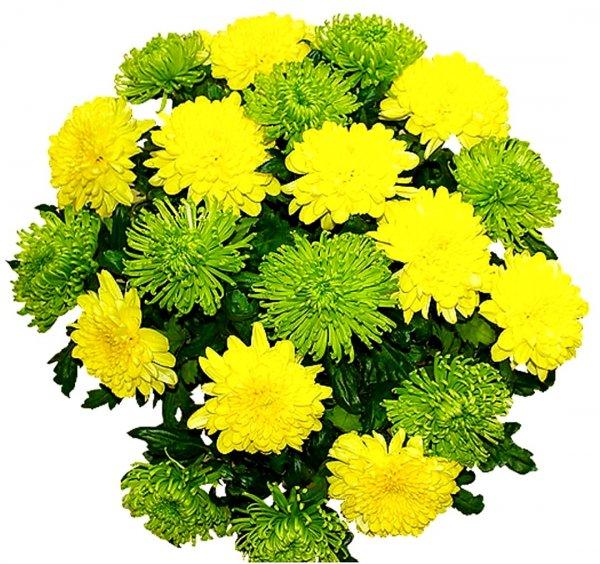 Cvetochniy discont centr,Магазин цветов, Доставка цветов и букетов, Искусственные растения и цветы, Магазин подарков и сувениров,Тюмень