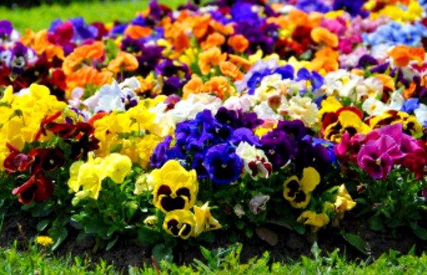 Цветы Сибири,Магазин цветов, Тепличное хозяйство,Тюмень