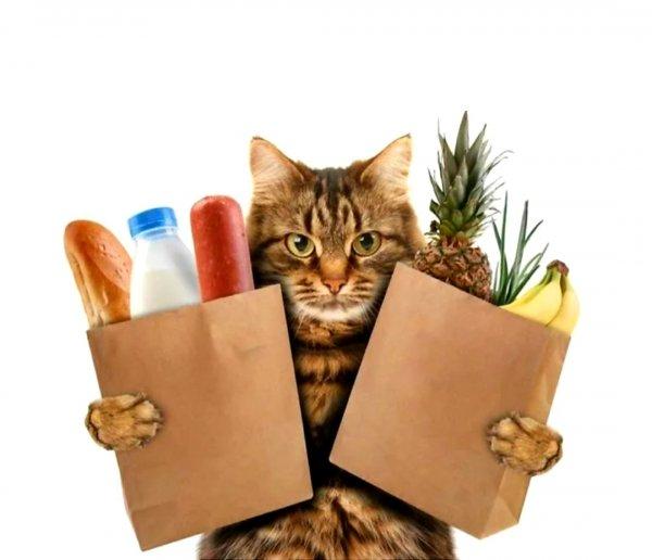 Тюменский кот,Товары для животных оптом, Зоомагазин, Интернет-магазин,Тюмень