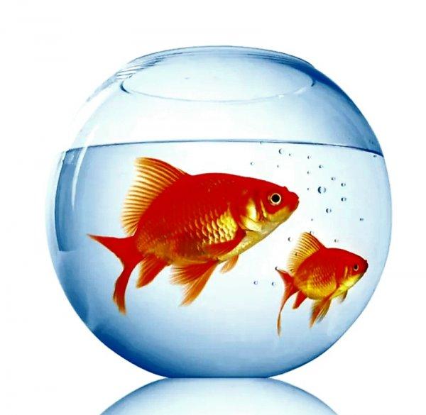 Водный мир,Магазин аквариумов, Зоомагазин, Интернет-магазин,Тюмень