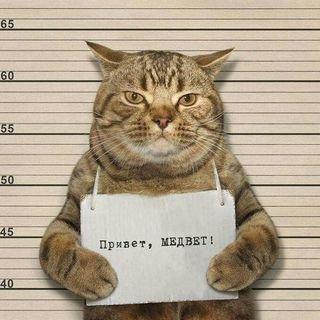 МЕД+ВЕТ,ветеринарная клиника,Магнитогорск