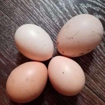 Яйца домашние куриные,Собственное производство,Иркутск