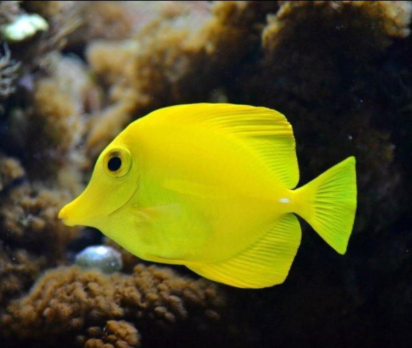 Мир аквариума,Зоомагазин, Магазин аквариумов,Тюмень