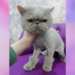 Кошки до 7 кг