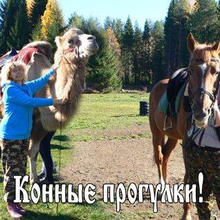 1  августа - Конные прогулки!