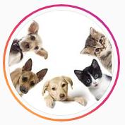 Зоомагазин 4 лапы,Ветеринария, Товары / услуги для животных,Караганда