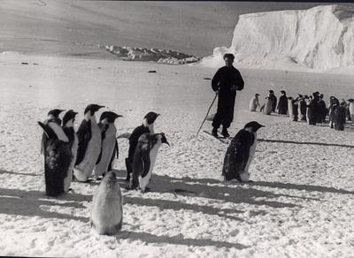 ««Новогодние каникулы в Антарктиде»
