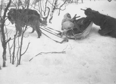 Виртуальная выставка «Собаки на войне. Применение служебных...