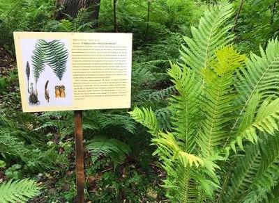 Выставка «Заповедный лес»