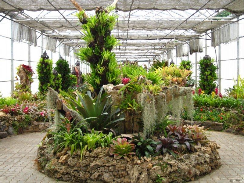 Турфирма «Городища» 5 ноября - Ботанический сад!,
