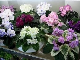Нужно завести эти растения , чтобы в доме было счастье