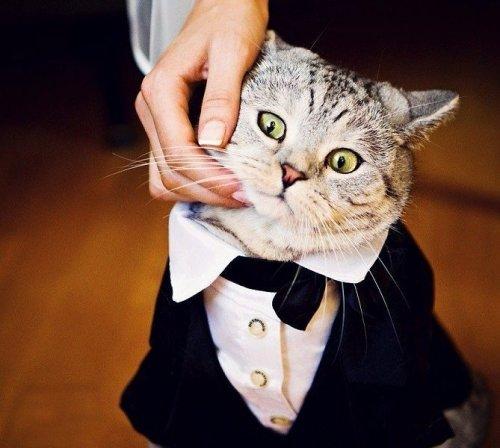 «Занимательная котология» - Все мужчины немножечко коты