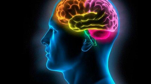 5 мифов о человеческом мозге