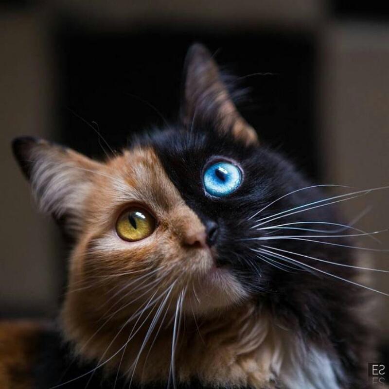 Коты и кошки-мышки , Lakmir Pride, Караганда