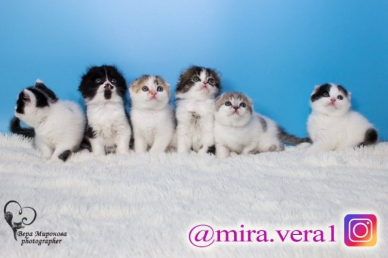 Кошки-мышки, Lakmir Pride, Караганда
