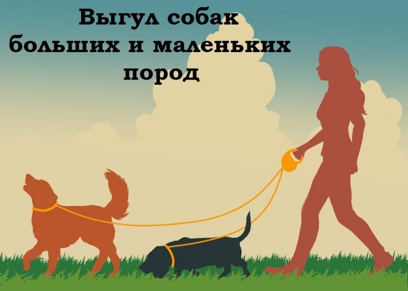 Прогулки.окт,🐕Выгул собак,Октябрьский