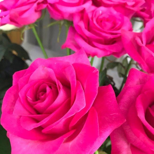 Роза 🌹 80 см длина 😉💪, Цветы «ника», Курганинск