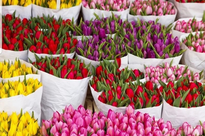 Тюльпаны , Престиж флора, Надым