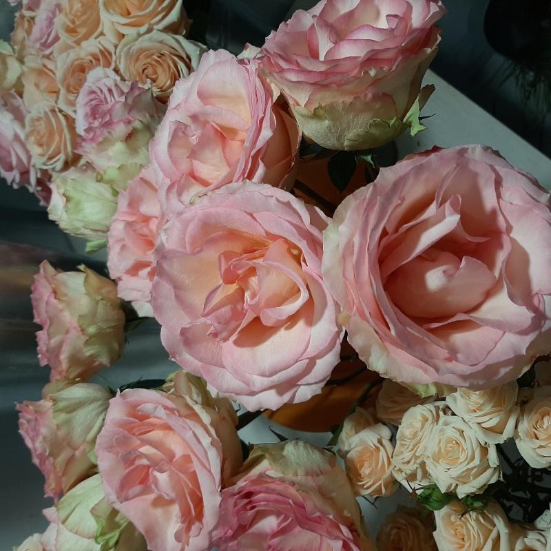 Роза Pink Mondial в наличии!, Студия Serebro.decor, Владикавказ