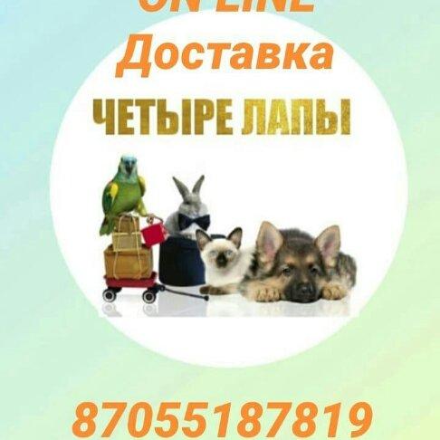 БЕСПЛАТНАЯ ДОСТАВКА, 4 ЛАПЫ, Степногорск