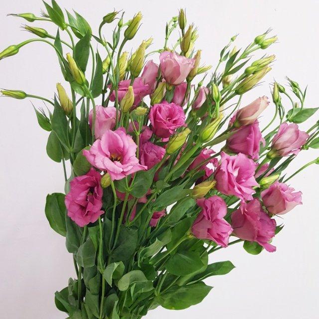 Прекрасная эустома , Mila Flowers, Урай