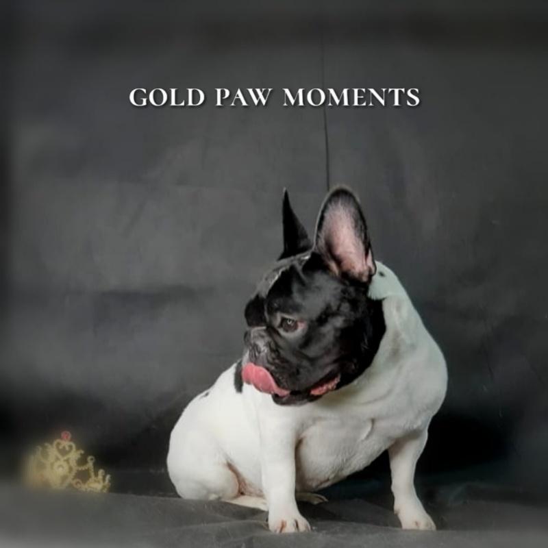 Профессиональный уход за шерстью собак, 🔸Gold PAW🔸 стрижка собак и кошек
