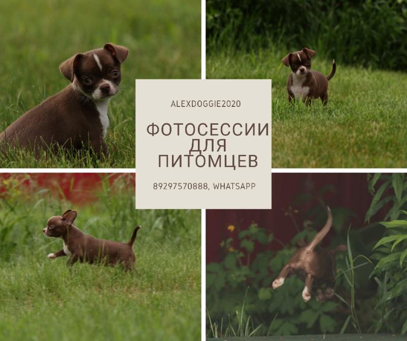 Фотосессия для ваших любимцев, 🔸Gold PAW🔸 стрижка собак и кошек