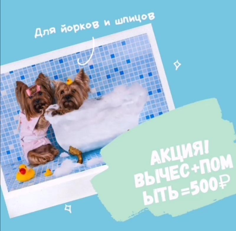 АКЦИЯ!!! для йорков и шпицов, 🔸Gold PAW🔸 стрижка собак и кошек