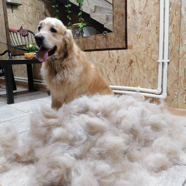 Экспресс линька для крупных пород , 🔸Gold PAW🔸 стрижка собак и кошек