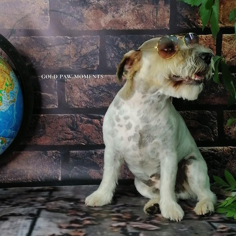 Стрижка собак и кошек в салоне, 🔸Gold PAW🔸 стрижка собак и кошек