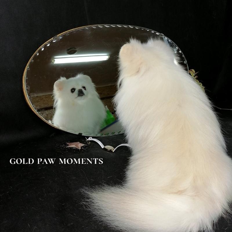 Парикмахер для собак, 🔸Gold PAW🔸 стрижка собак и кошек
