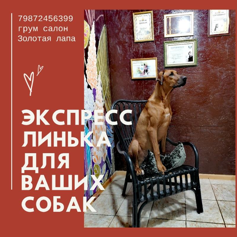 Стрижка кошек и собак , 🔸Gold PAW🔸 стрижка собак и кошек