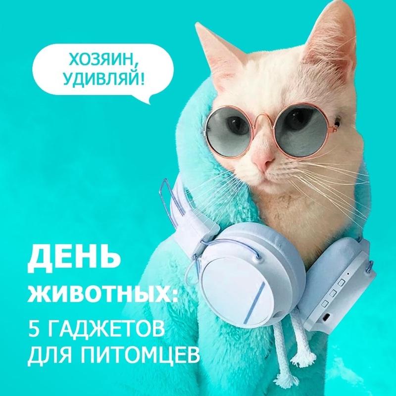 День животных: 5 гаджетов для питомцев., Любимый город, Ижевск