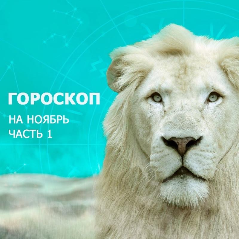 Как пережить ноябрь: гороскоп от Любимого города, Любимый город, Ижевск