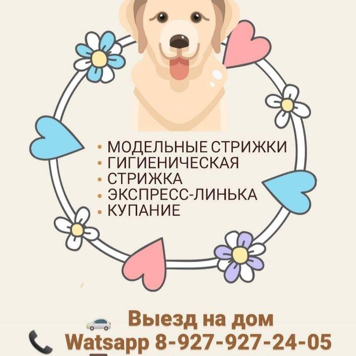 """Стрижка собак и кошек """"Дай лапу"""", Грумминг животных,  Октябрьский"""