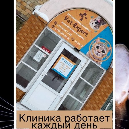 Vet-Expert,Ветеринарная клиника,Караганда