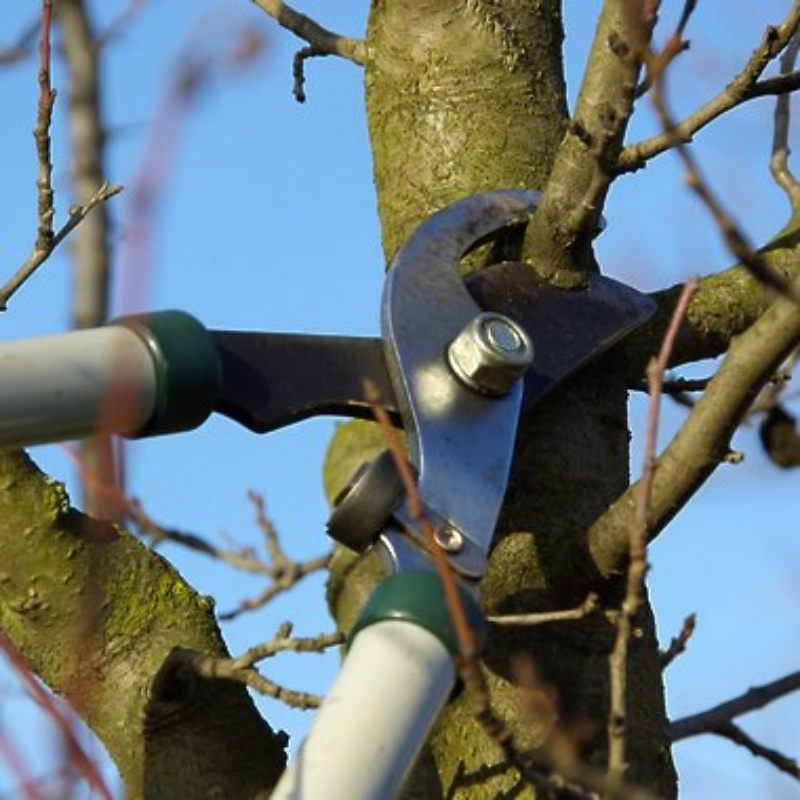 Обрезка деревьев от Обрезка деревьев