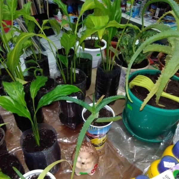 Свежее поступление комнатных растений