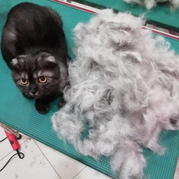 Экспресс-линька для кошки