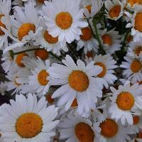 FLORENS, салон цветов, irkutsk
