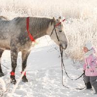 Мини-ферма с животными, Семейных отдых, творчество и детское развитие, zhigulyovsk