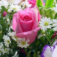 Цветы и подарки, Цветы, rossosh