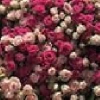 Цветы beautiful_rose_tdk, Магазин цветов, taldykorgan